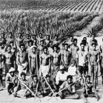 South Pacific islanders working on an Australian plantation. (Source: NLA)