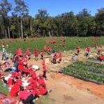 Young strawberry pickers make the most of the harvest